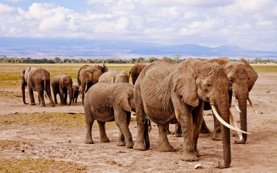 A Luxury Safari on a Budget? Here's How to Do It