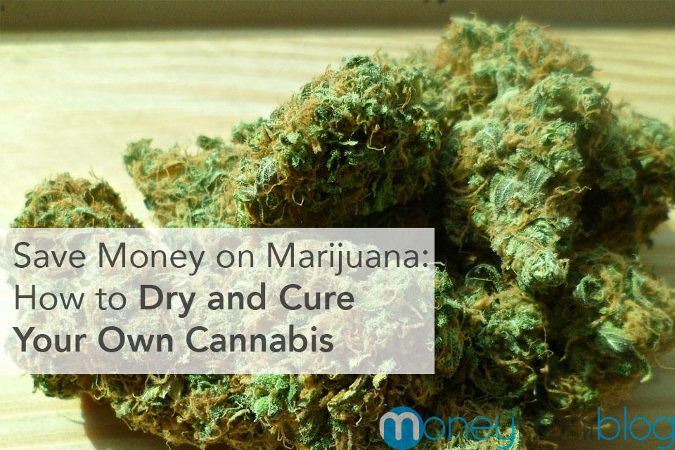 Save Money on Marijuana: How to Dry and Cure Your Own Cannabis