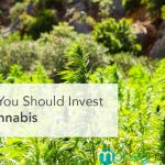 Why You Should Invest in Cannabis