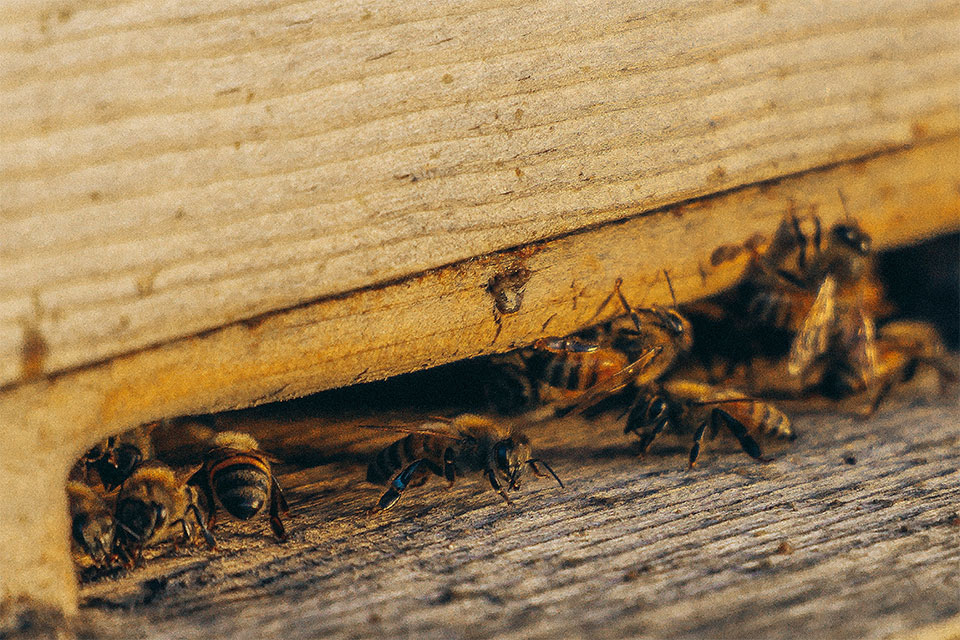 How Much Does the Average Homeowner Spend on Pest Control?