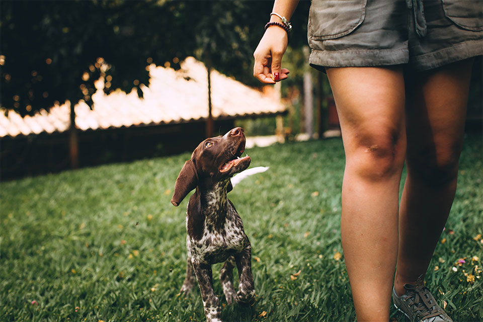 5 Tips for Staying Productive at Home With Your Dog