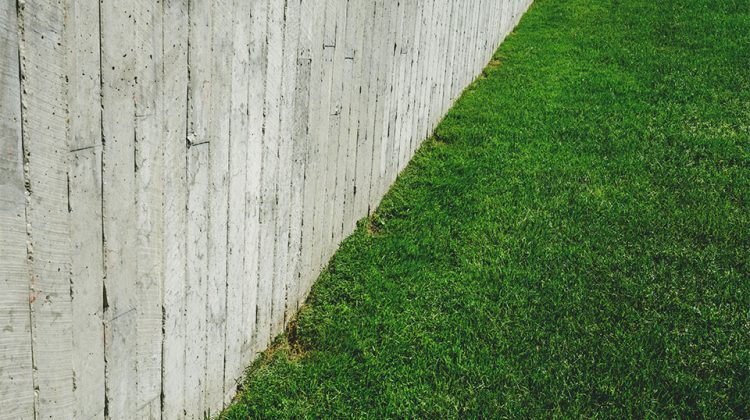 6 Tips for Saving Money on Lawn Care